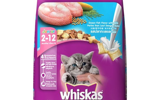 Whiskas Kitten Cat Food Junior Ocean Fish, 1.1 kg Pack